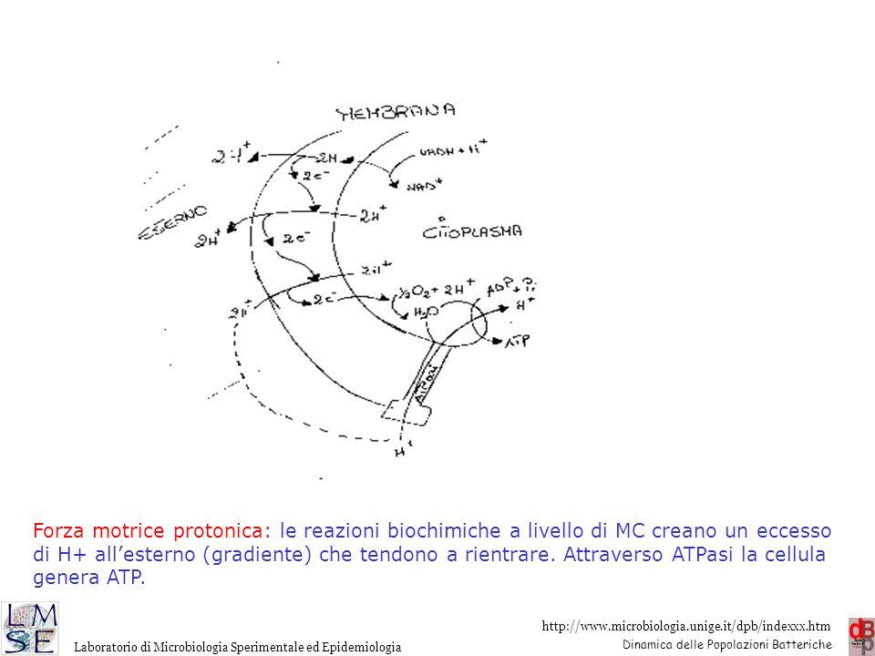 Forza motrice protonica: le reazioni biochimiche a livello di MC creano un eccesso