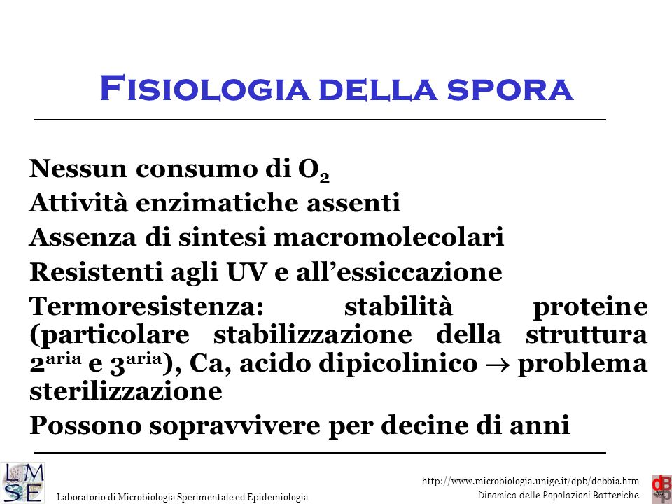 Fisiologia della spora
