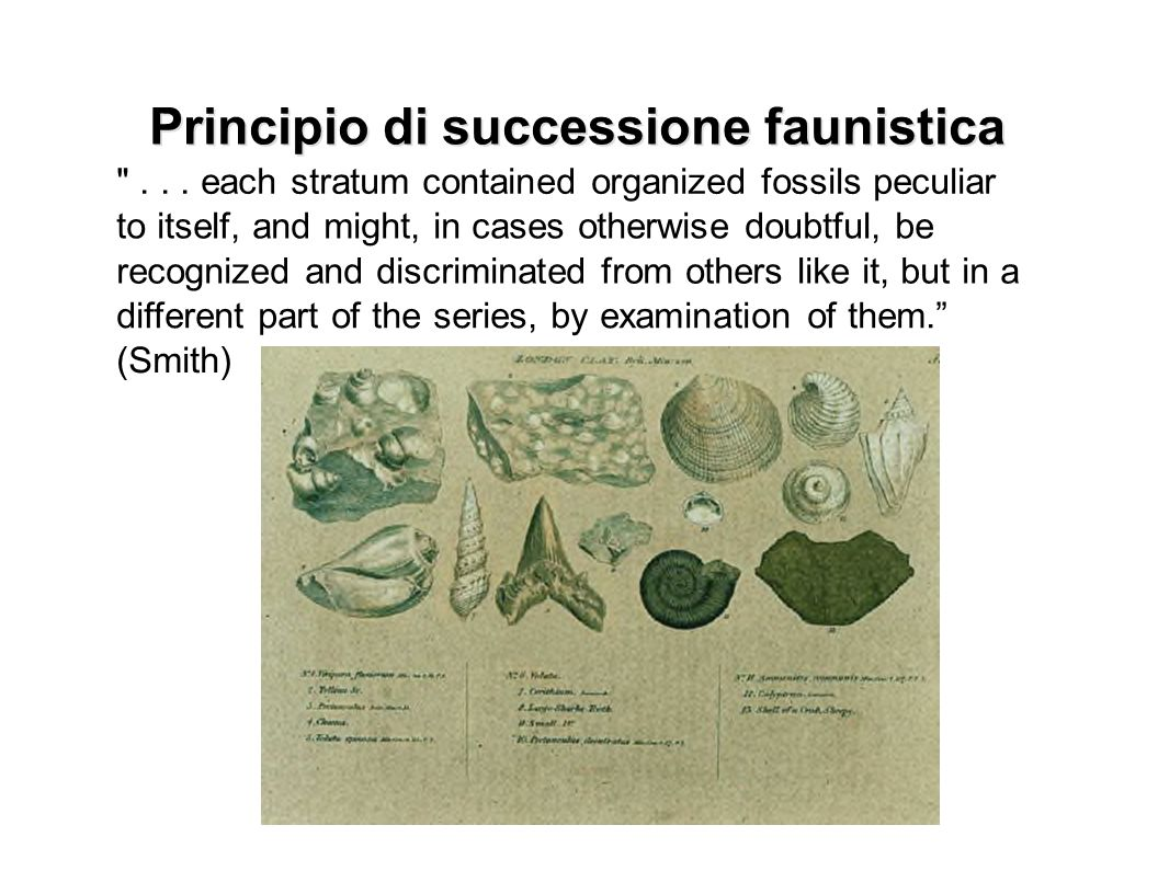 Principio di successione faunistica