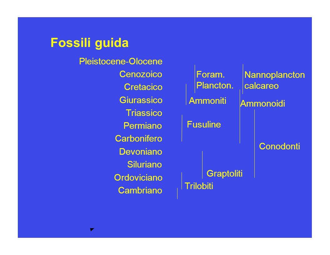 Fossili guida Pleistocene-Olocene Pleistocene-Olocene Cenozoico Foram.