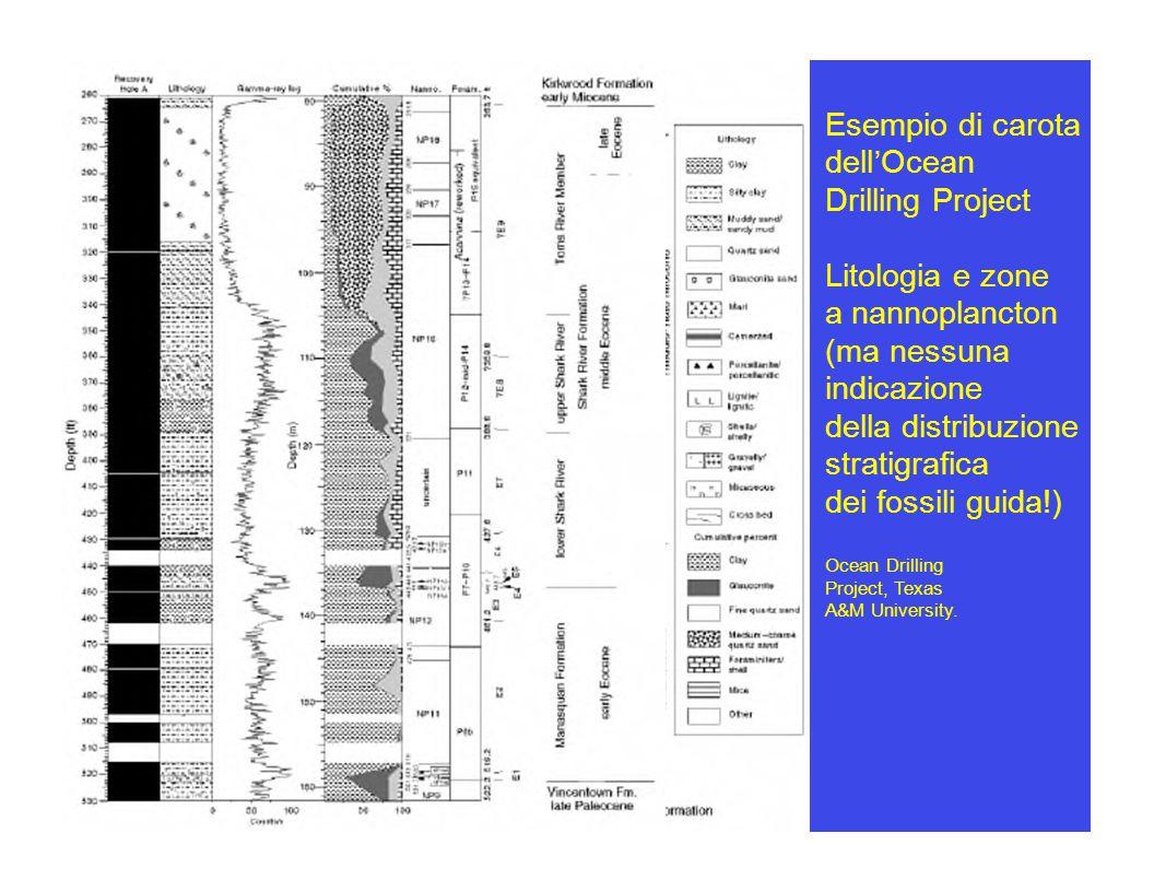 Esempio di carota dell ' Ocean Drilling Project Litologia e zone