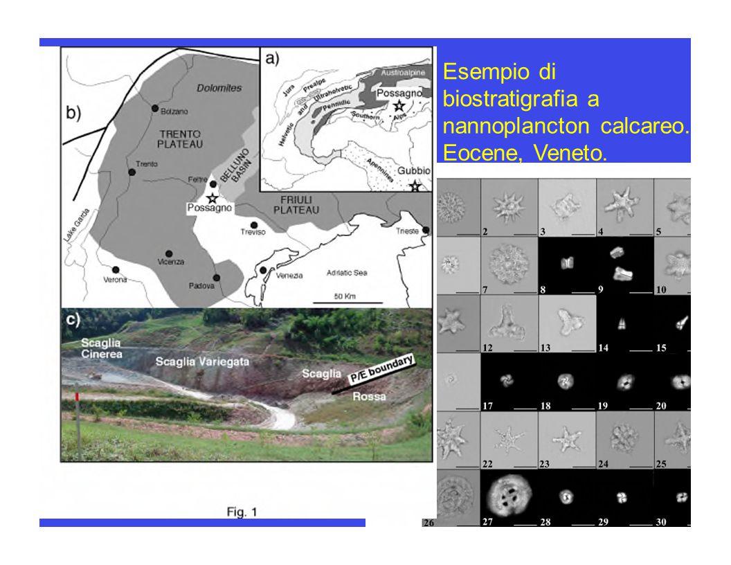 Esempio di biostratigrafia a nannoplancton calcareo. Eocene, Veneto.