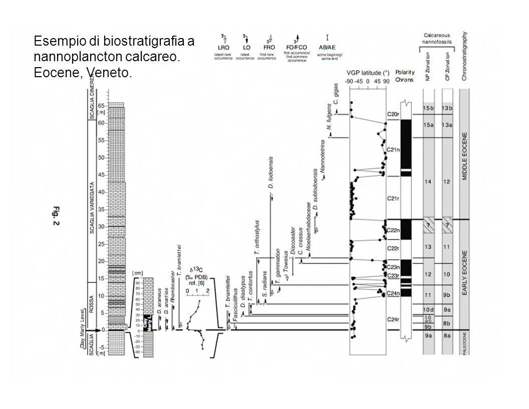 Esempio di biostratigrafia a