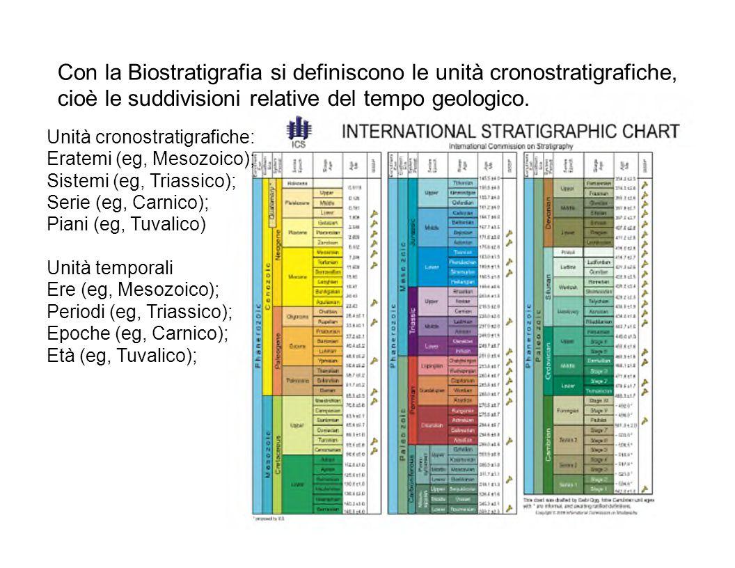 Con la Biostratigrafia si definiscono le unità cronostratigrafiche,