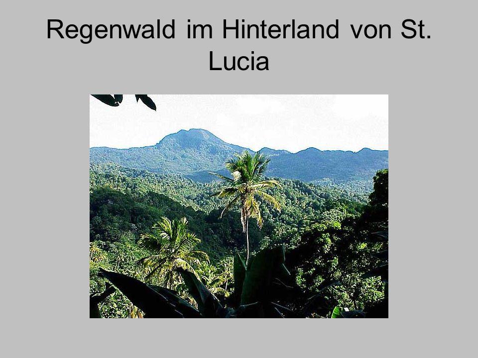 Regenwald im Hinterland von St. Lucia