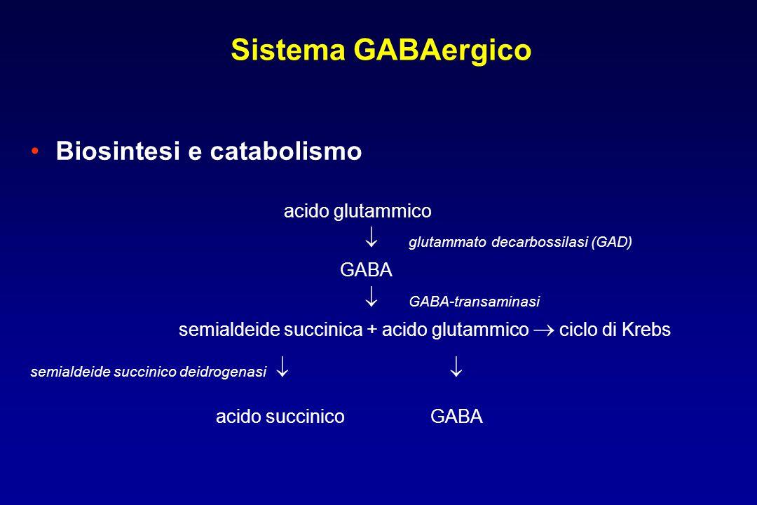Sistema GABAergico Biosintesi e catabolismo acido glutammico