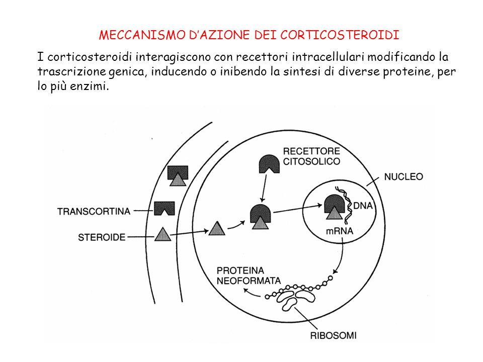MECCANISMO D'AZIONE DEI CORTICOSTEROIDI