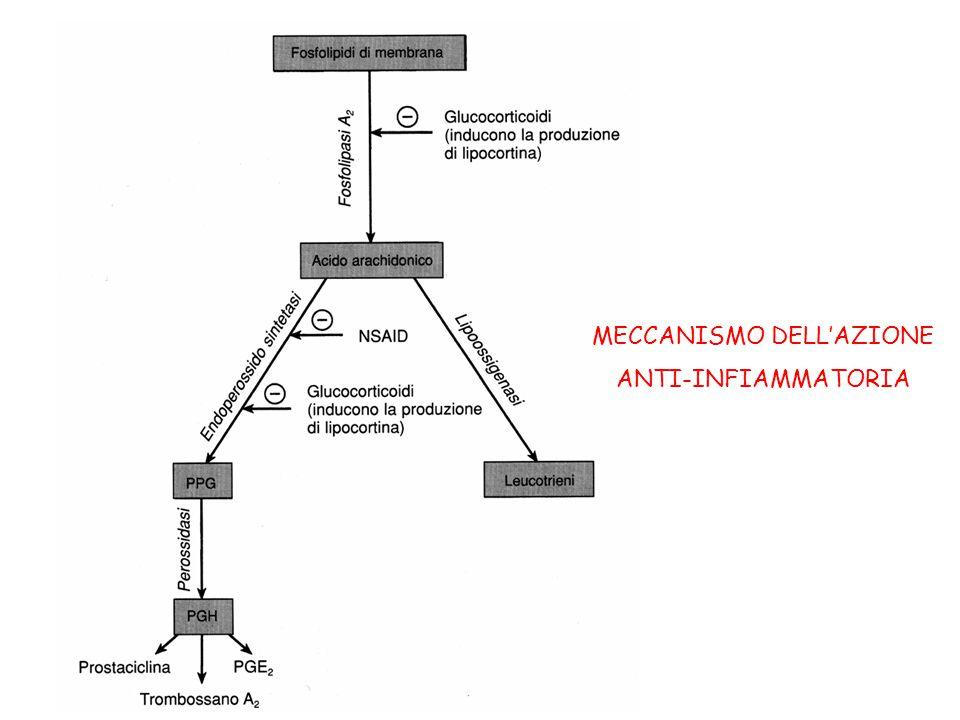 MECCANISMO DELL'AZIONE