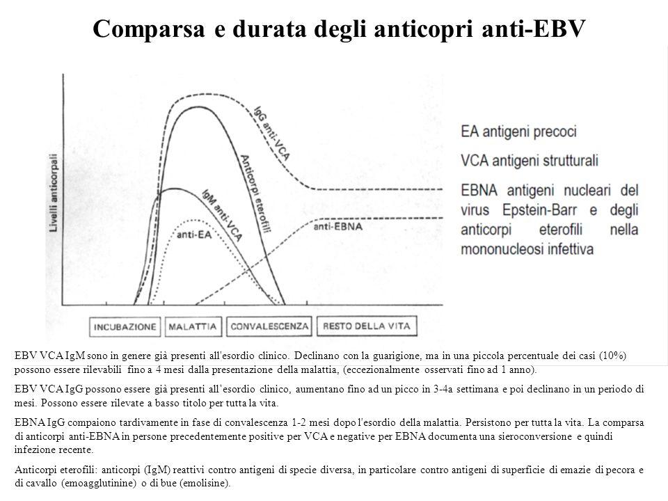 Comparsa e durata degli anticopri anti-EBV