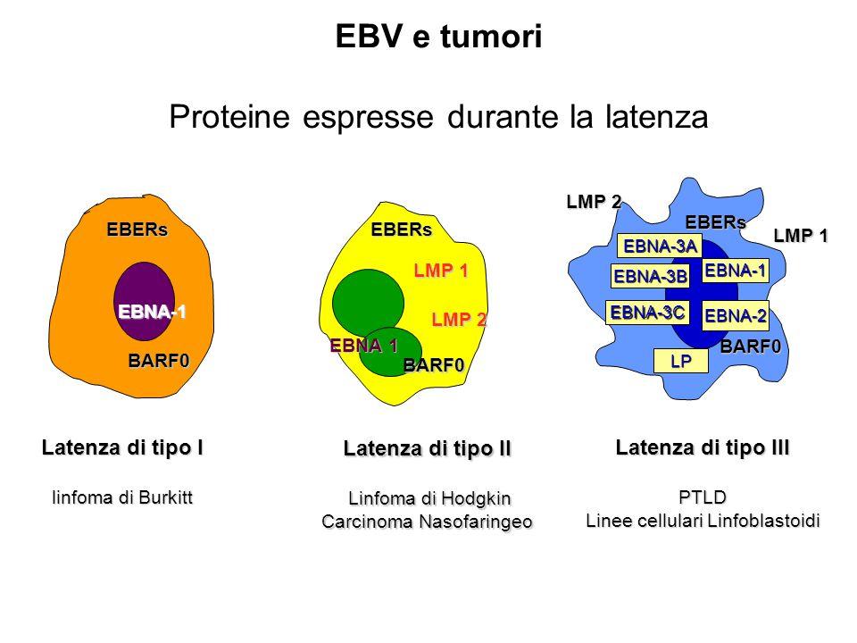 Proteine espresse durante la latenza