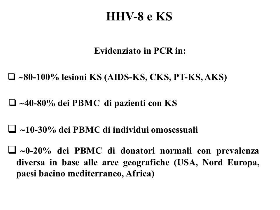 HHV-8 e KS 10-30% dei PBMC di individui omosessuali