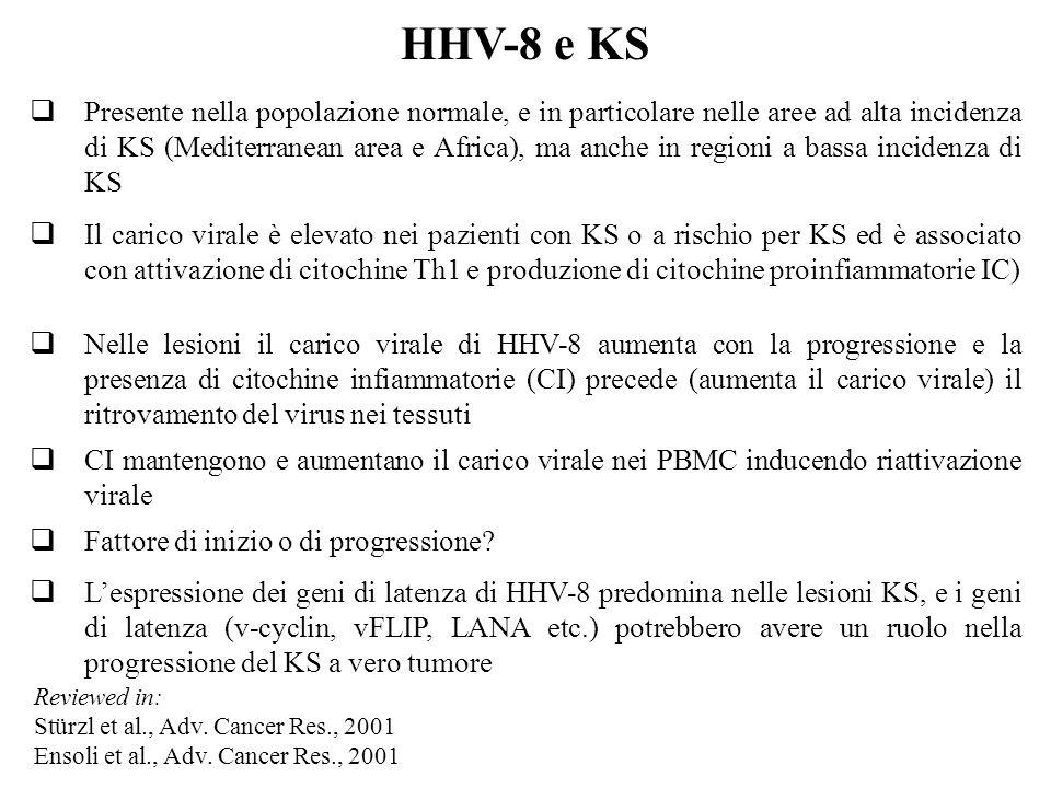 HHV-8 e KS