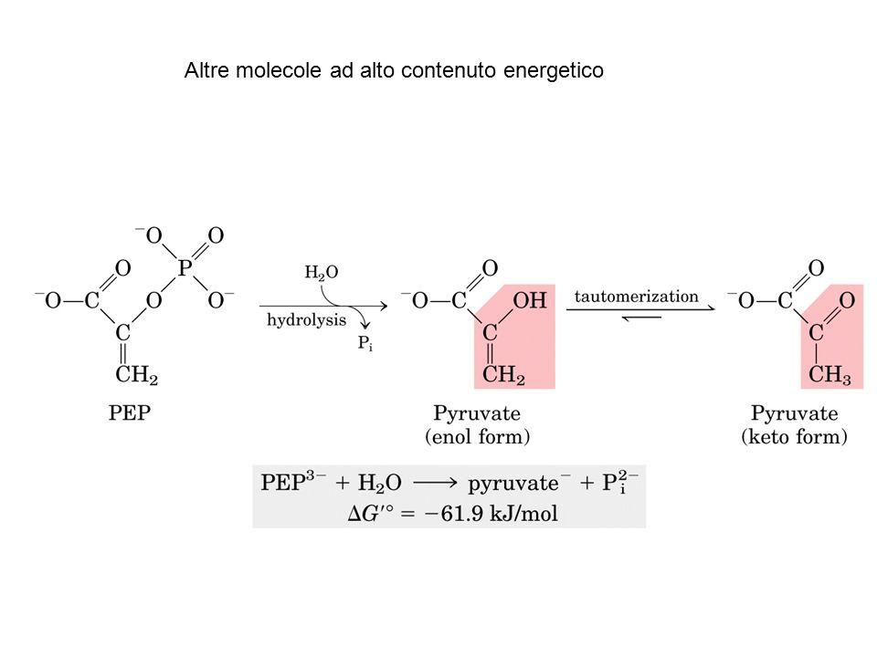 Altre molecole ad alto contenuto energetico