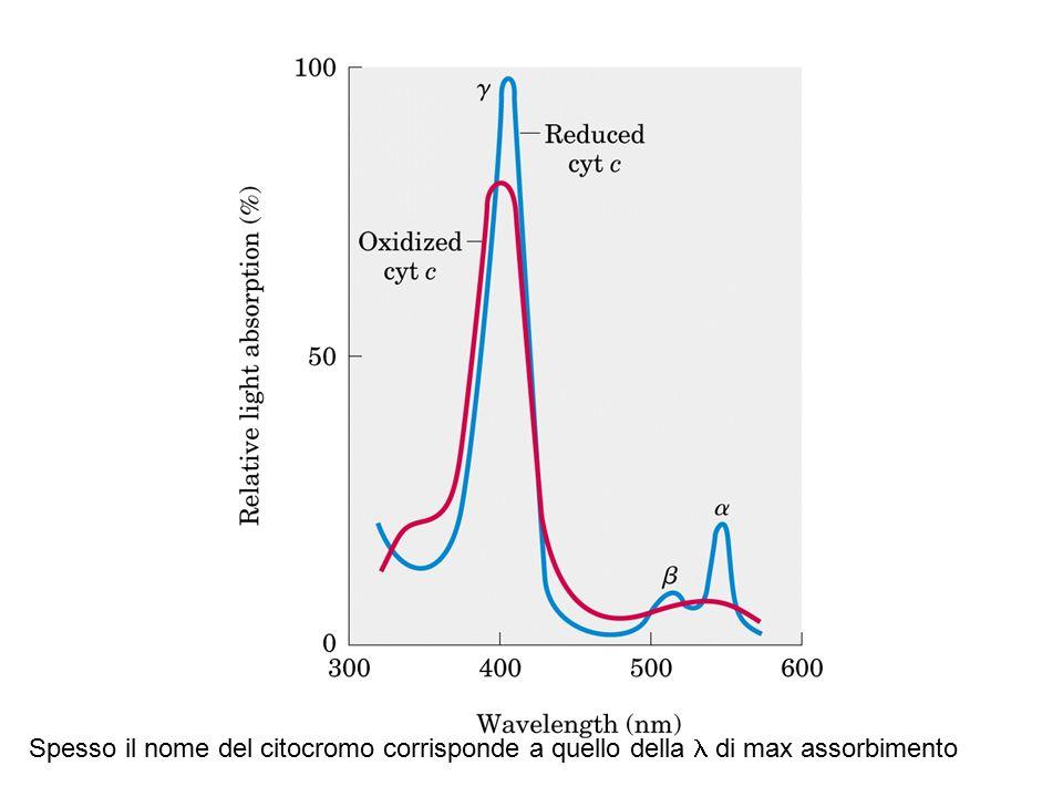 Spesso il nome del citocromo corrisponde a quello della l di max assorbimento