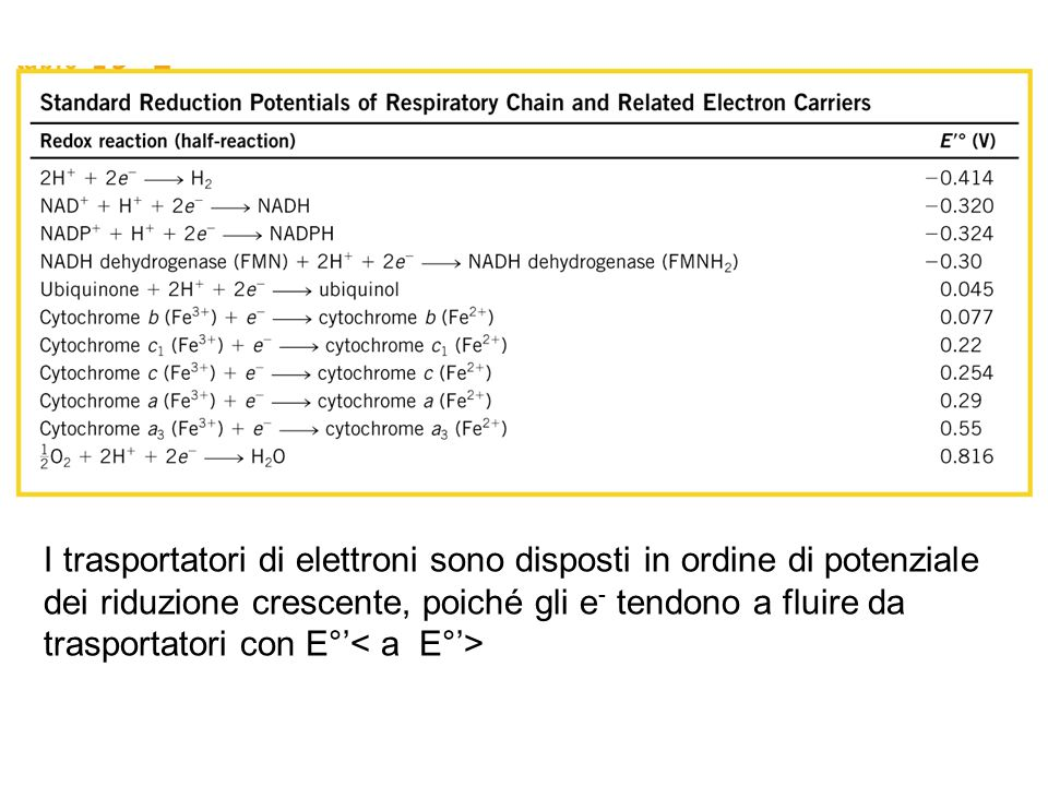 I trasportatori di elettroni sono disposti in ordine di potenziale dei riduzione crescente, poiché gli e- tendono a fluire da trasportatori con E°'< a E°'>