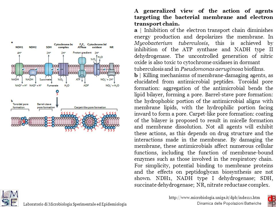 A generalized view of the action of agents targeting the bacterial membrane and electron transport chain.
