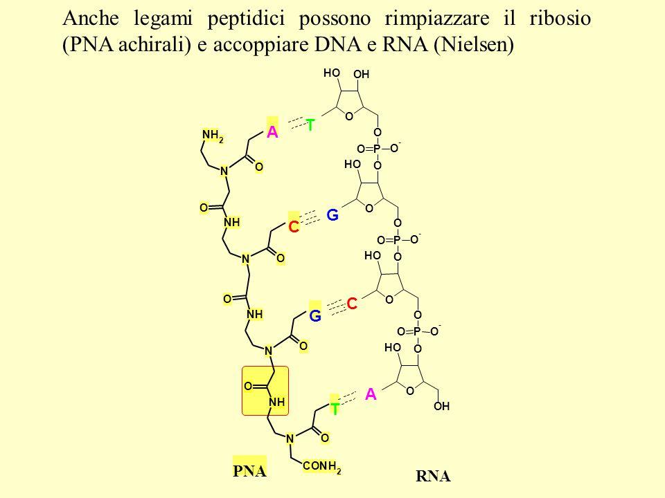 Anche legami peptidici possono rimpiazzare il ribosio (PNA achirali) e accoppiare DNA e RNA (Nielsen)