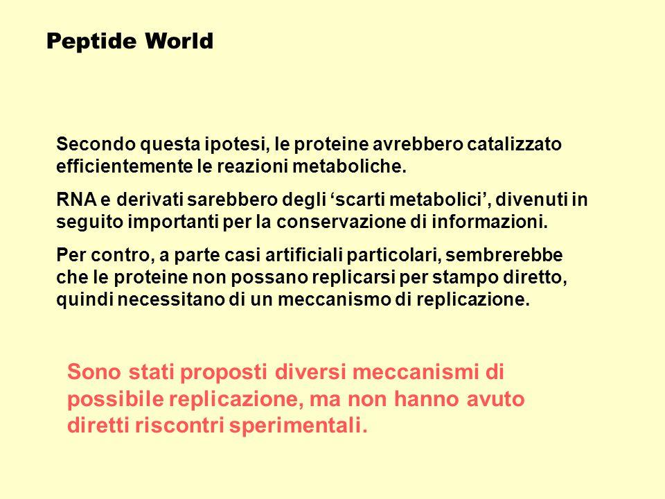Peptide World Secondo questa ipotesi, le proteine avrebbero catalizzato efficientemente le reazioni metaboliche.
