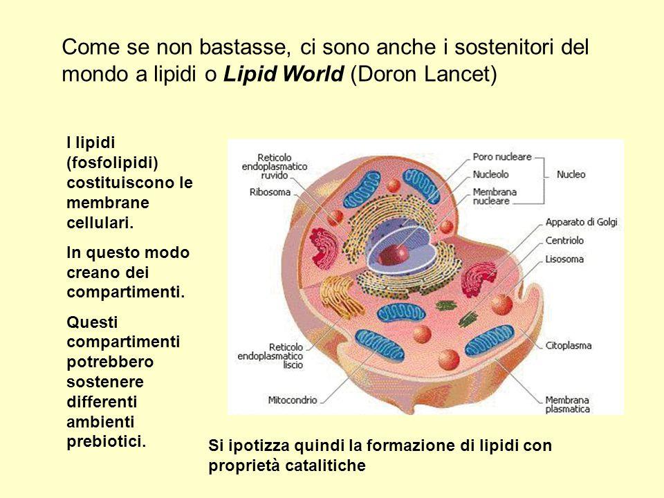 Come se non bastasse, ci sono anche i sostenitori del mondo a lipidi o Lipid World (Doron Lancet)