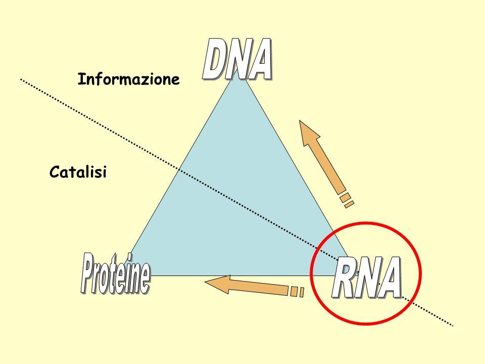 DNA Informazione Catalisi Proteine RNA