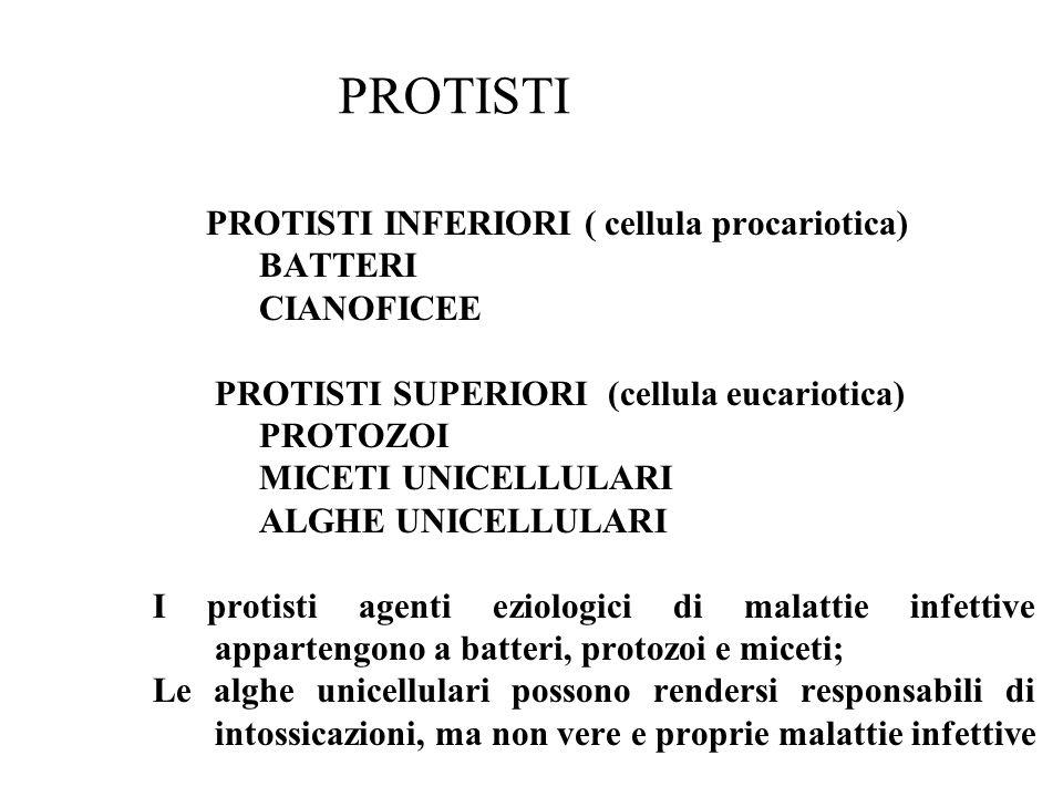 PROTISTI PROTISTI INFERIORI ( cellula procariotica) BATTERI CIANOFICEE