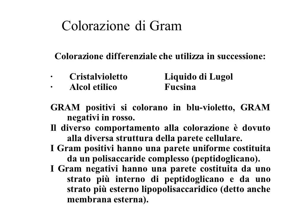 Colorazione differenziale che utilizza in successione: