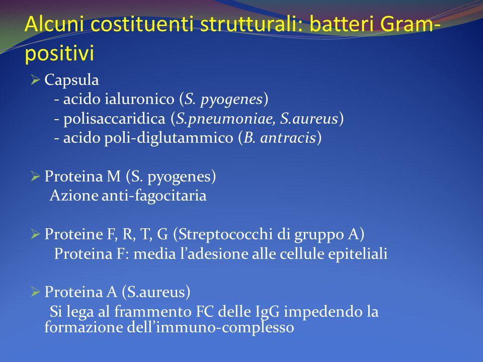 Alcuni costituenti strutturali: batteri Gram- positivi