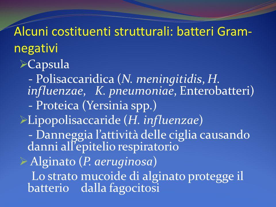 Alcuni costituenti strutturali: batteri Gram- negativi