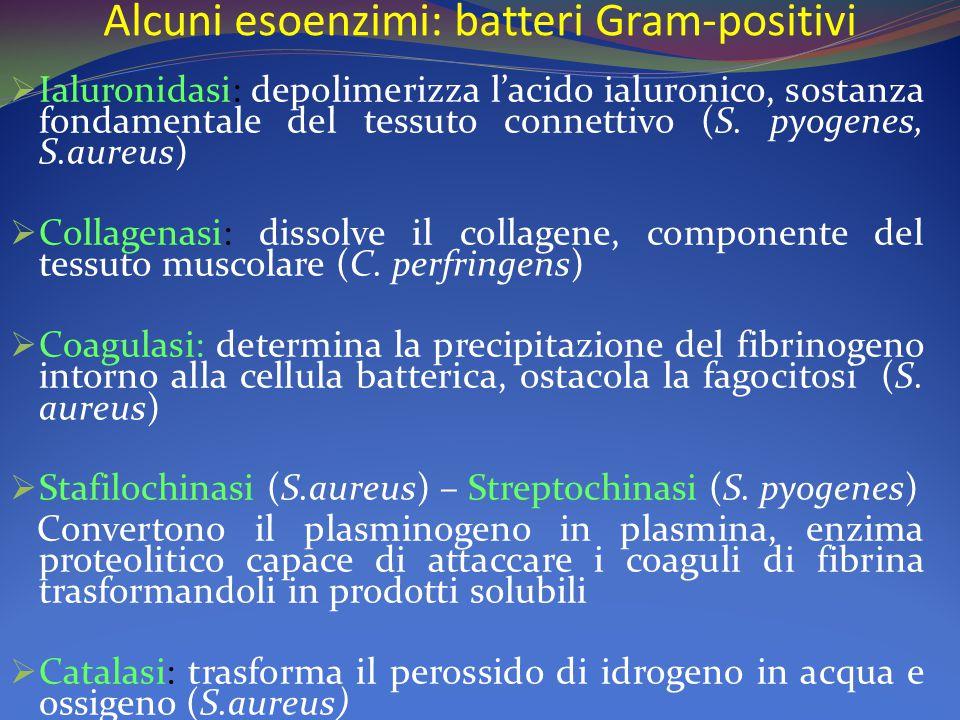 Alcuni esoenzimi: batteri Gram-positivi