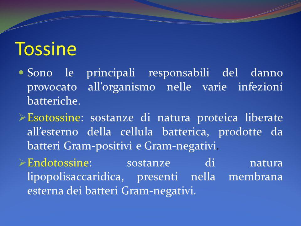 Tossine Sono le principali responsabili del danno provocato all'organismo nelle varie infezioni batteriche.