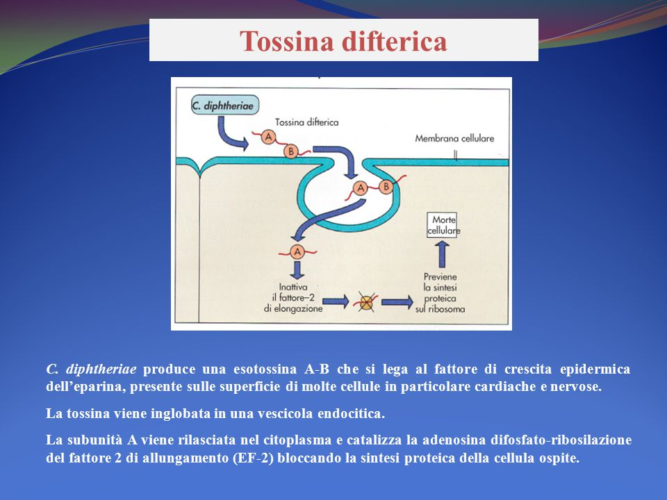 Tossina difterica