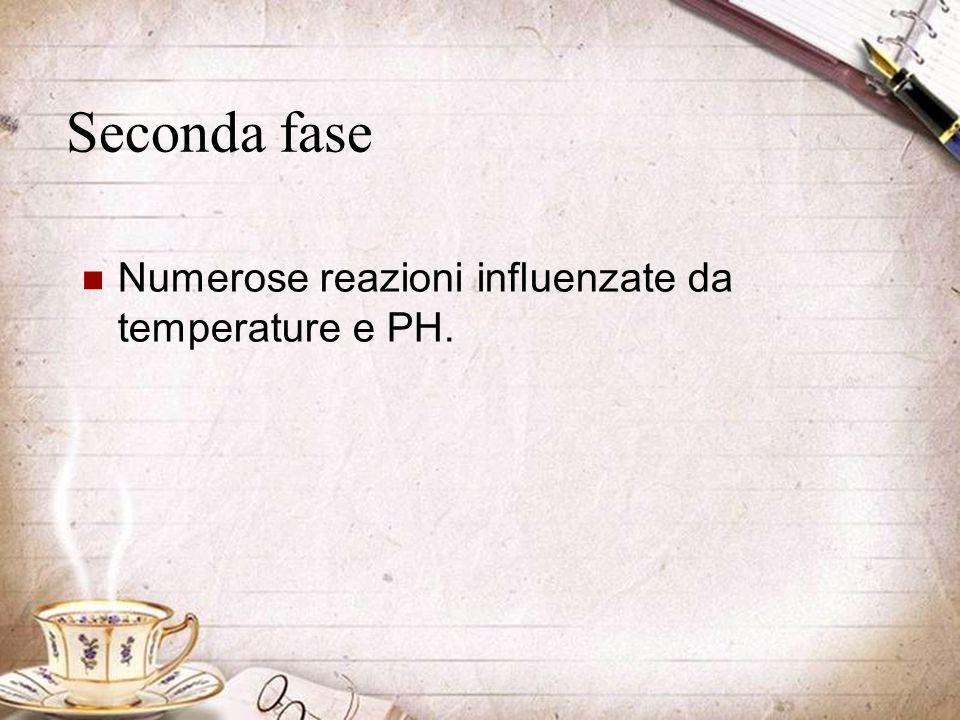 Seconda fase Numerose reazioni influenzate da temperature e PH.