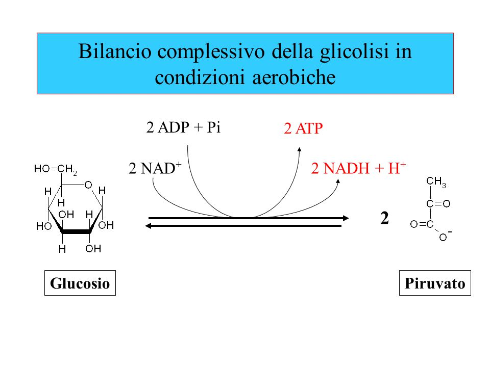 Bilancio complessivo della glicolisi in condizioni aerobiche