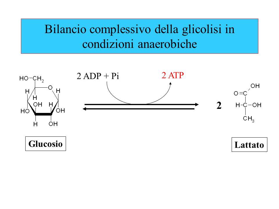 Bilancio complessivo della glicolisi in condizioni anaerobiche