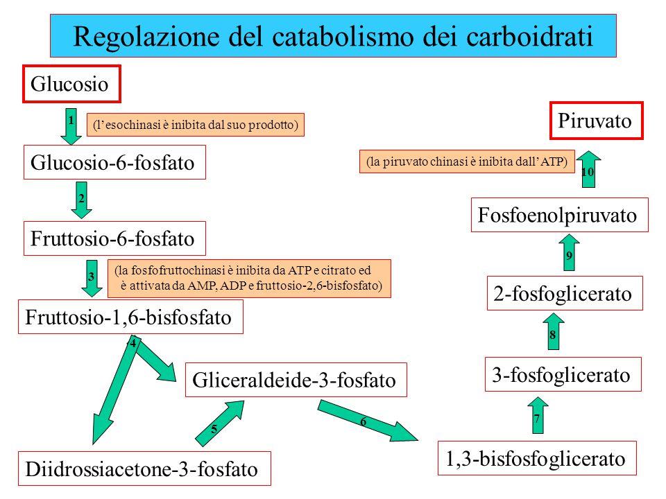 Regolazione del catabolismo dei carboidrati