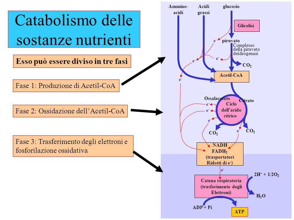 Catabolismo delle sostanze nutrienti