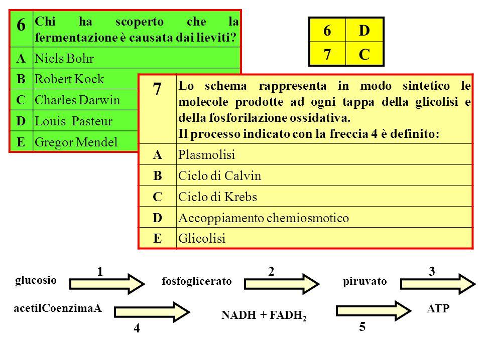 6 Chi ha scoperto che la fermentazione è causata dai lieviti A. Niels Bohr. B. Robert Kock. C.