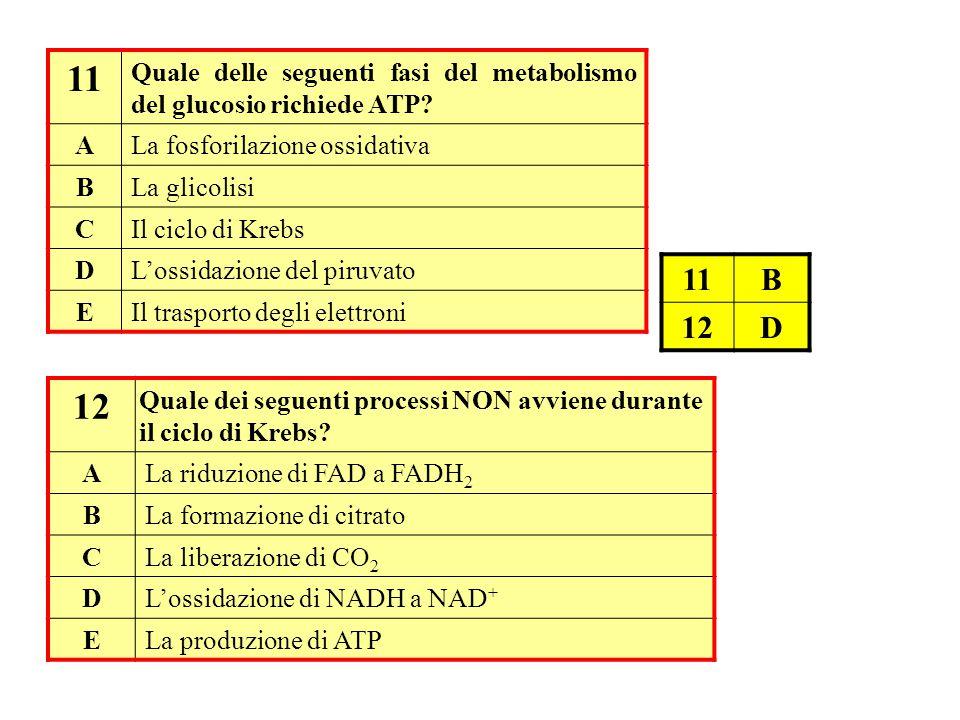 11 Quale delle seguenti fasi del metabolismo del glucosio richiede ATP A. La fosforilazione ossidativa.