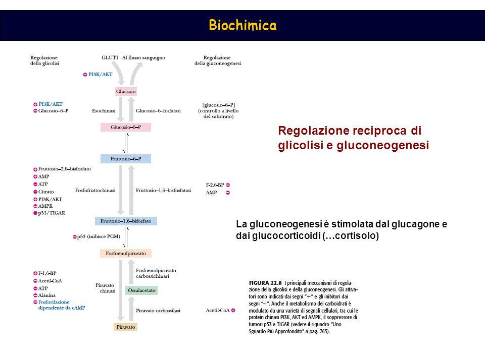 Regolazione reciproca di glicolisi e gluconeogenesi