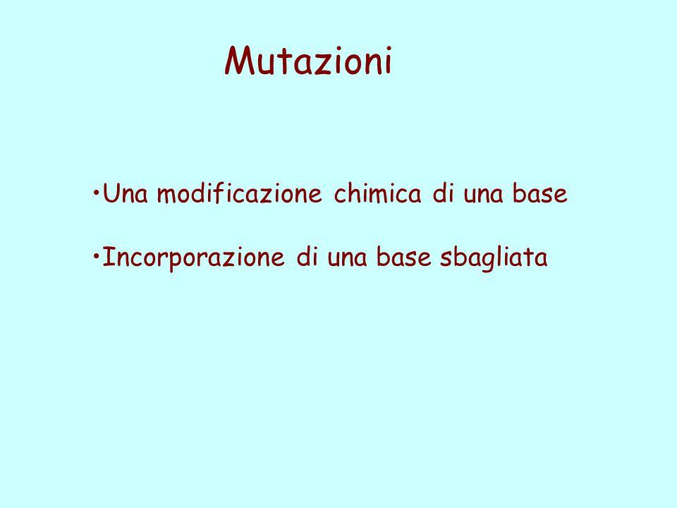 Mutazioni Una modificazione chimica di una base