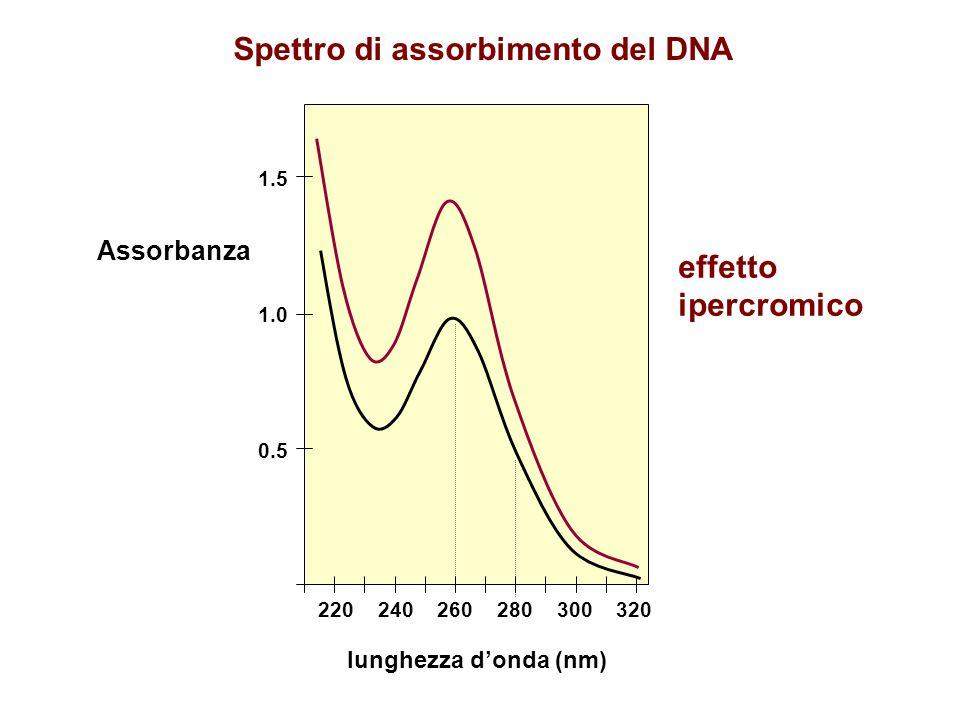 Spettro di assorbimento del DNA