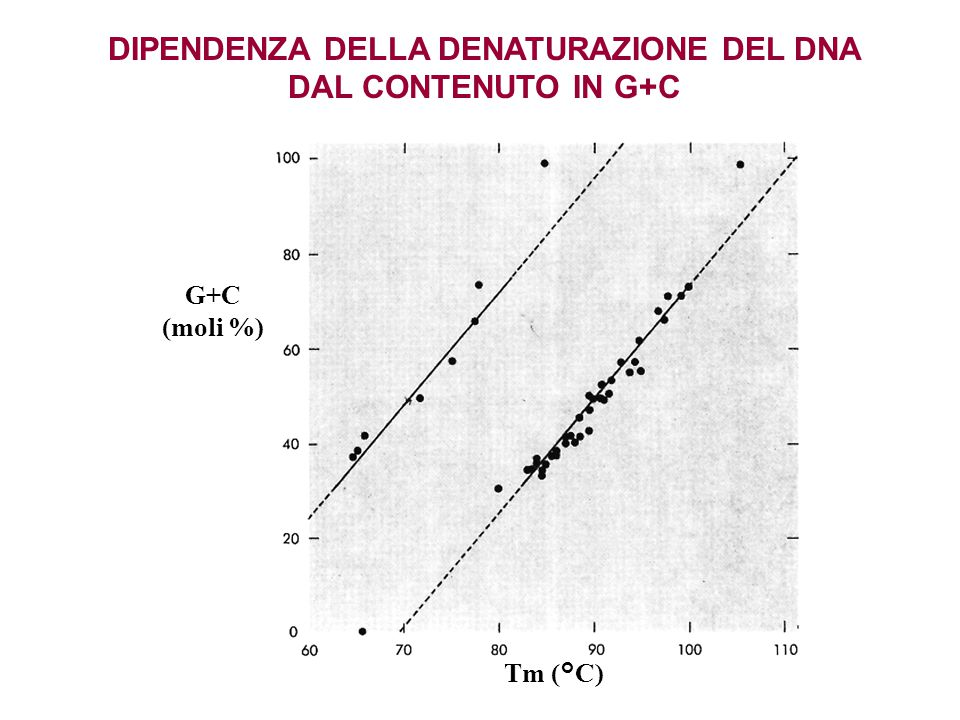 DIPENDENZA DELLA DENATURAZIONE DEL DNA DAL CONTENUTO IN G+C