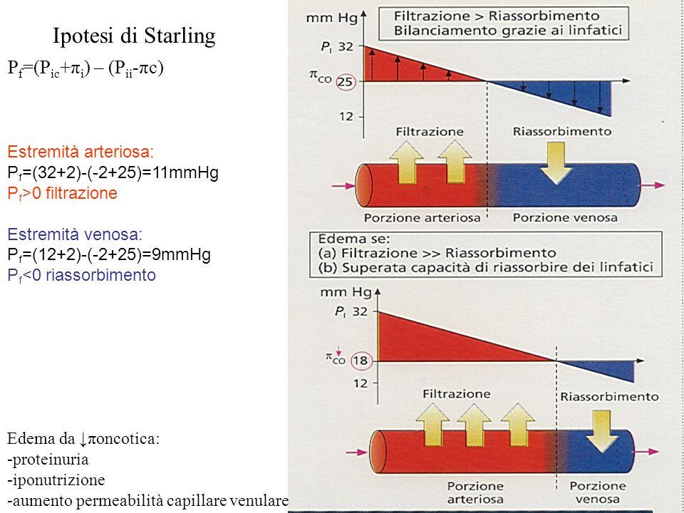 Ipotesi di Starling Pf=(Pic+πi) – (Pii-πc) Estremità arteriosa:
