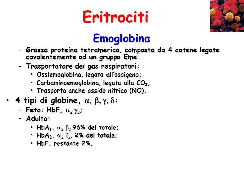 Eritrociti Emoglobina 4 tipi di globine, :