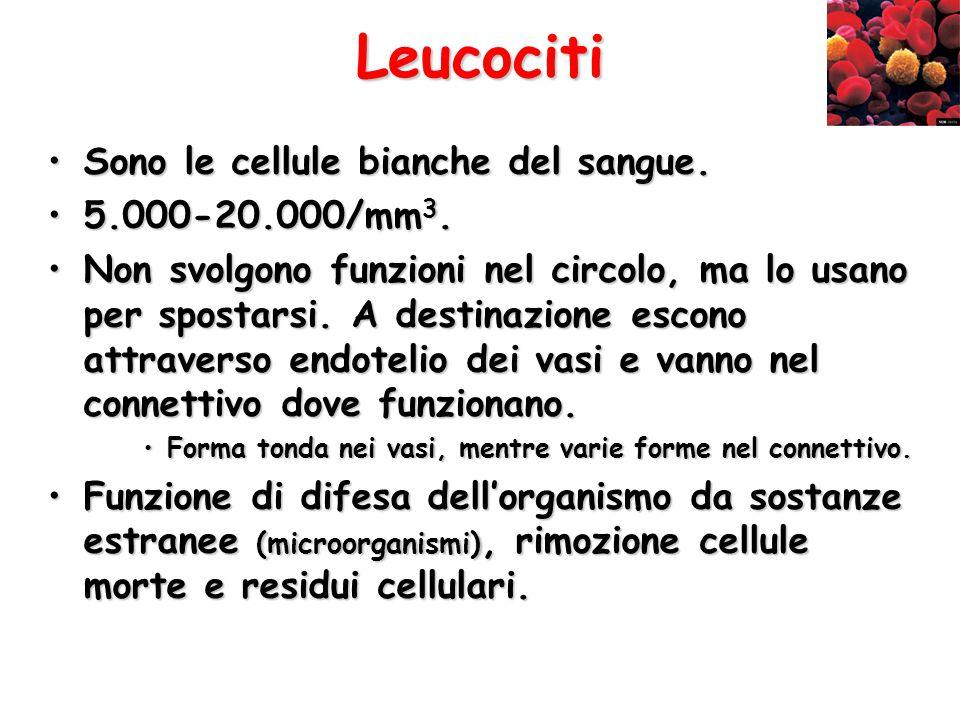 Leucociti Sono le cellule bianche del sangue. 5.000-20.000/mm3.