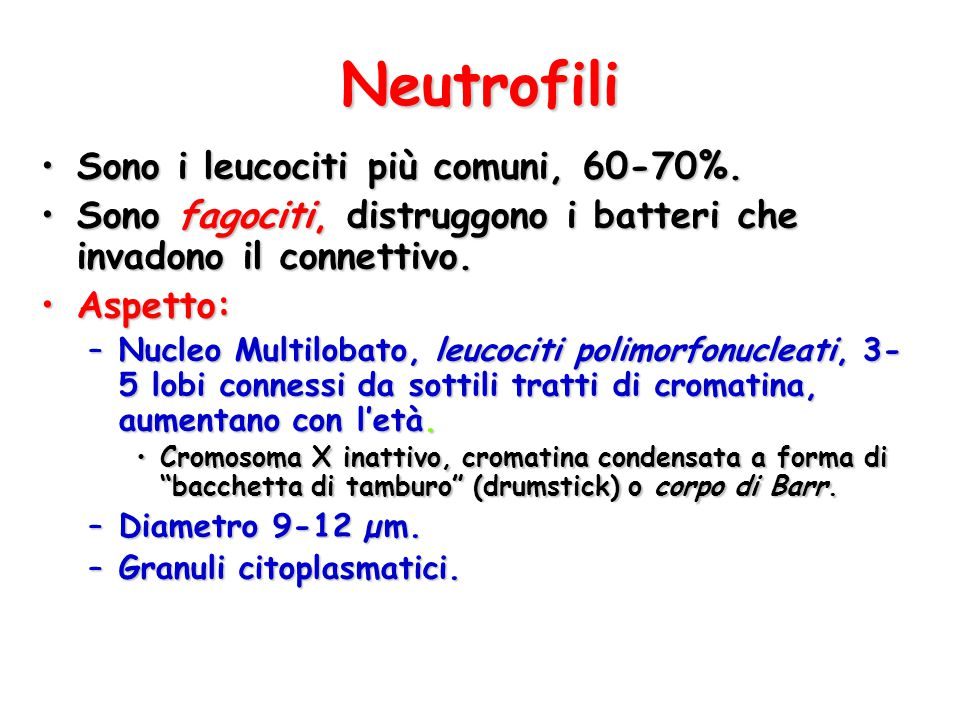 Neutrofili Sono i leucociti più comuni, 60-70%.