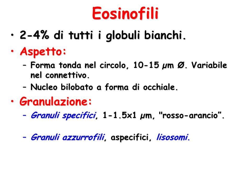 Eosinofili 2-4% di tutti i globuli bianchi. Aspetto: Granulazione: