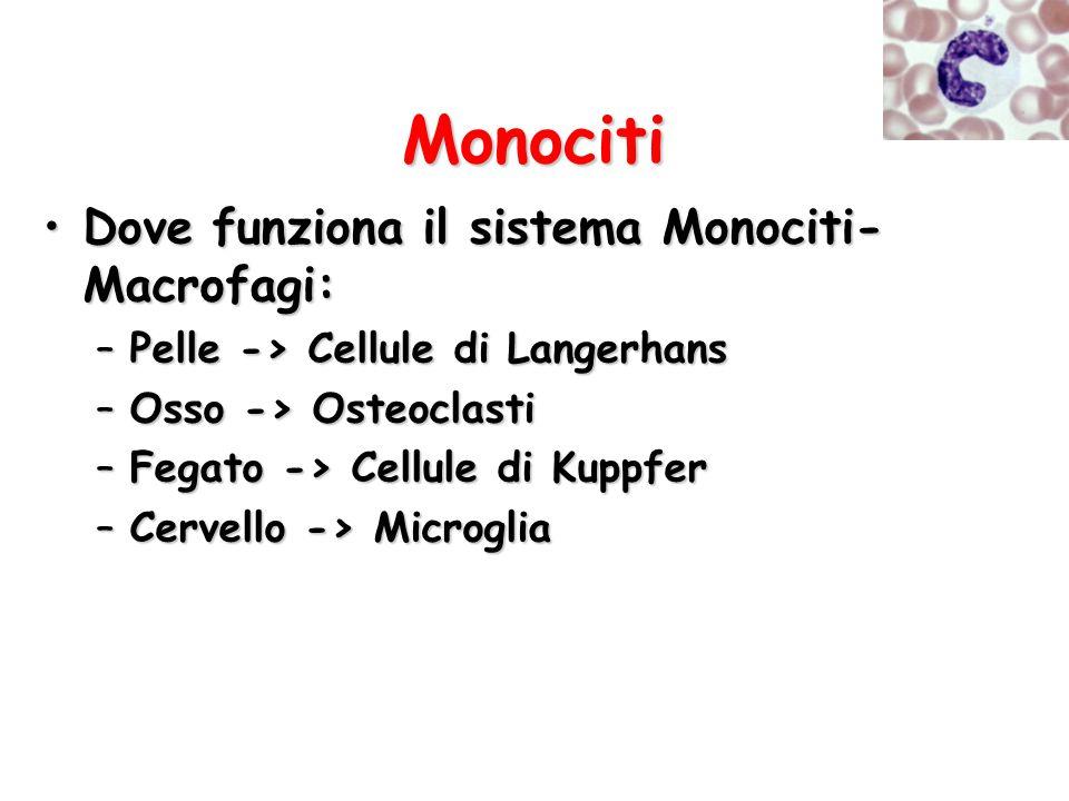 Monociti Dove funziona il sistema Monociti-Macrofagi: