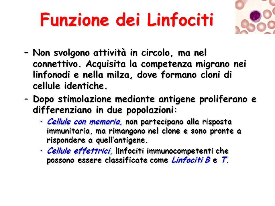 Funzione dei Linfociti