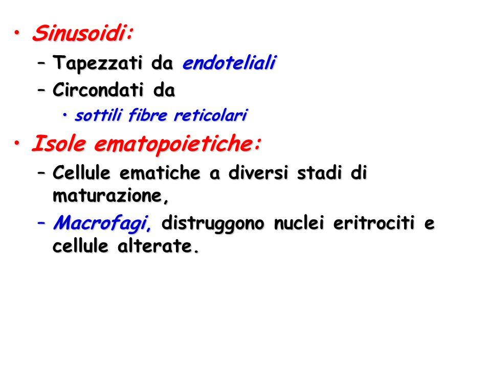 Isole ematopoietiche: